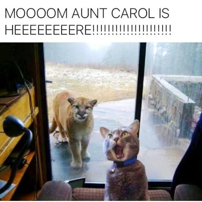 lioness visiting cat humor