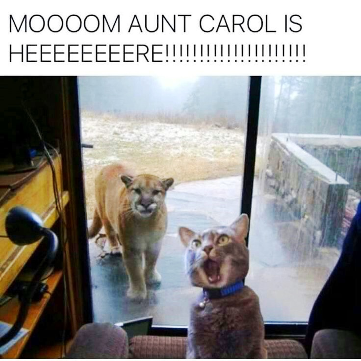 lioness visiting cat humor